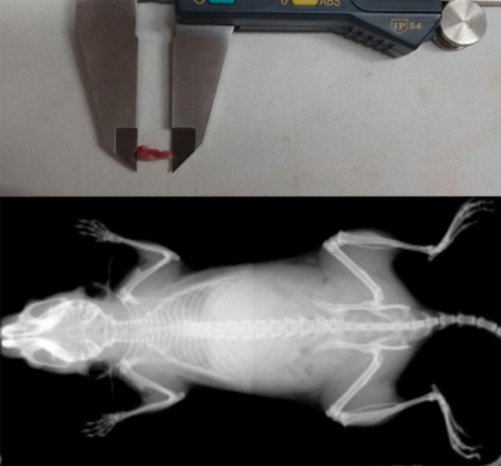 Nanoscan - Mouse Femur
